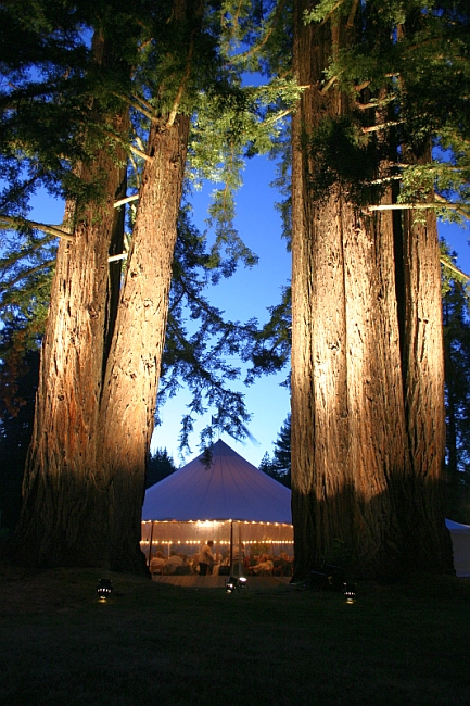 lightingredwoods-full.jpg